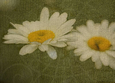 Rustic Daisies Art Print by Tingy Wende