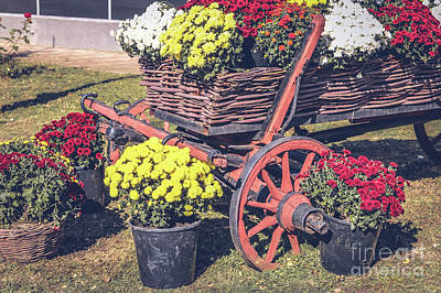 Photograph - Rustic Display Of Mums by Claudia M Photography