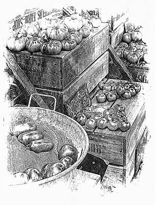 Digital Art - Rustic Display Of Tomatoes For Sale In Black And White by Dorothy Berry-Lound