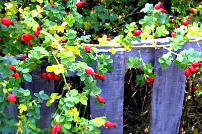 Fall Bushes Digital Art - Rustic Fence And Wild Rosehips by Will Borden