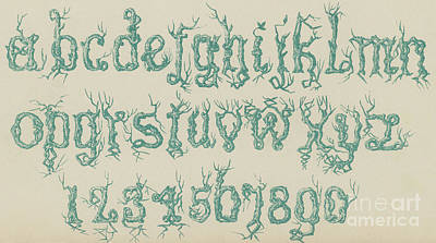 Vine Drawing - Rustic Font by English School