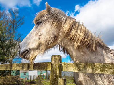 Photograph - Rustic Horse by Nick Bywater