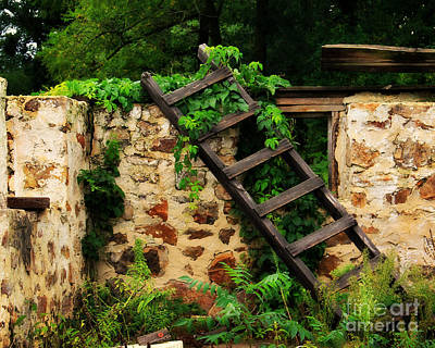 Rustic Ladder Art Print by Perry Webster