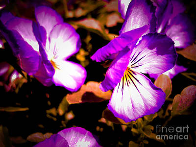 Photograph - Rustic Pansies by Sonya Chalmers