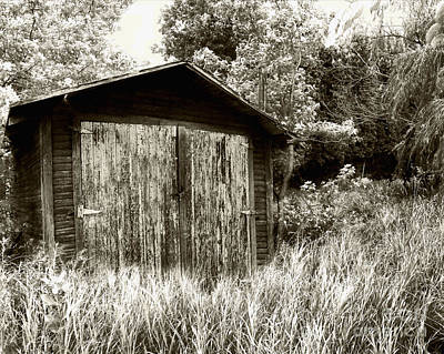 Rustic Shed Art Print by Perry Webster