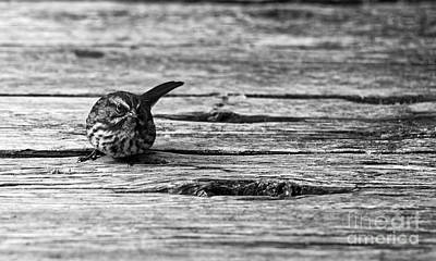 Photograph - Rustic Songbird by Sue Harper