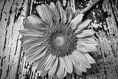 Photograph - Rustic Sunflower by Garry Gay