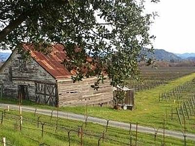 Wine Country Photograph - Rustic Wine Country by Kathleen Fitzpatrick