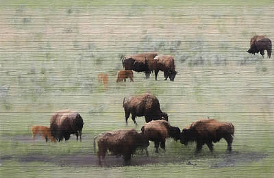 Yellowstone Mixed Media - Rustic Yellowstone Bison Herd by Dan Sproul
