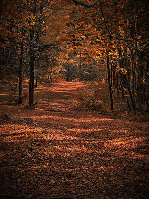 Photograph - Rustling Pathway by GJ Blackman