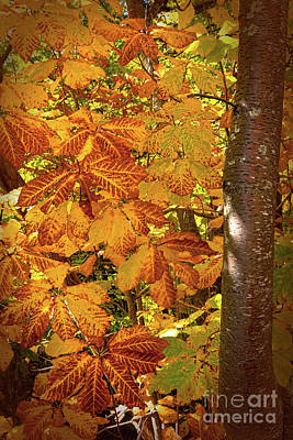 Photograph - Rusty Autumn Fall Color Leaves In The Blue Ridge by Dan Carmichael