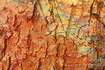Abstracts From Nature Photograph - Rusty Bark Abstract by Carol Groenen