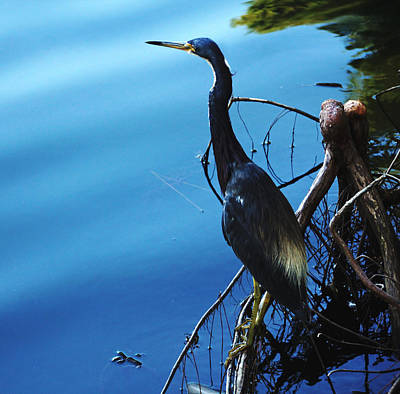 Photograph - Rusty Blue by Debbie Oppermann