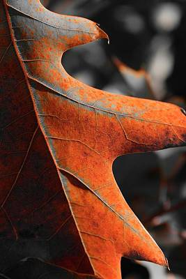 Photograph - Rusty Cougar Leaf by Jerry Sodorff