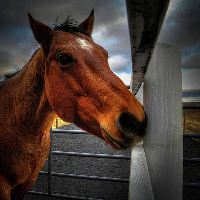 Photograph - The Gelding by David Patterson