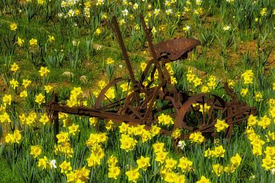Daffodils Photograph - Rusty Farm Equipment by Garry Gay