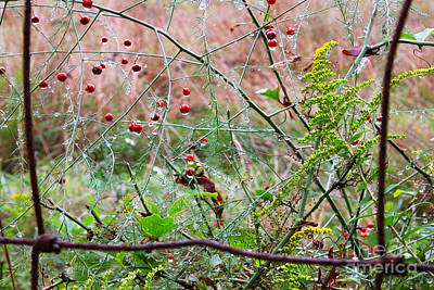 All You Need Is Love - Rusty Fence Red Berries and Raindrops by Thomas R Fletcher