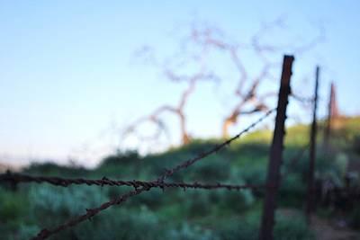 Photograph - Rusty Gate Rural Tree 2 by Matt Harang