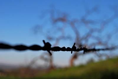 Photograph - Rusty Gate Rural Tree by Matt Harang