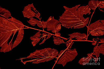 Photograph - Rusty Leaves by Michelle Meenawong