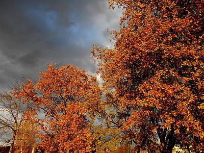 Photograph - Rusty Nature And Some Bad Weather by Erika H