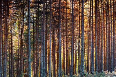 Rusy Forest Art Print by Evgeni Dinev