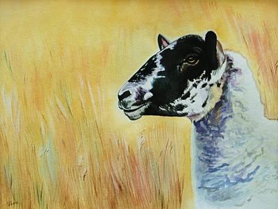 Rutland Sheep  Art Print by Lucy Deane