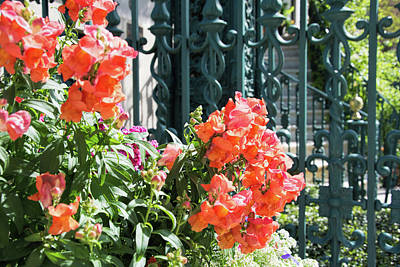 Photograph - Rutledge House In Spring by Ed Waldrop
