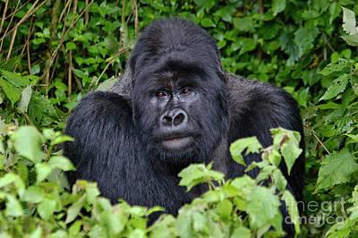 Photograph - Rwanda_d109 by Craig Lovell