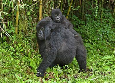 Photograph - Rwanda_d119 by Craig Lovell