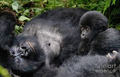 Photograph - Rwanda_d150 by Craig Lovell