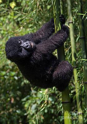 Photograph - Rwanda_d33 by Craig Lovell