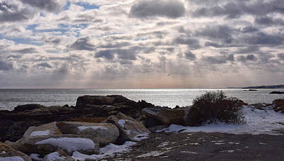 Photograph - Rye In Winter by Tricia Marchlik