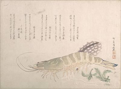 Cuttlefish Digital Art - Ryrykyo Shinsai    Shrimp And Cuttlefish by Anne Pool