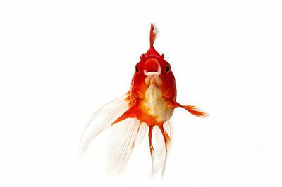 Ryukin Goldfish Carassius Auratus Art Print by Gerard Lacz