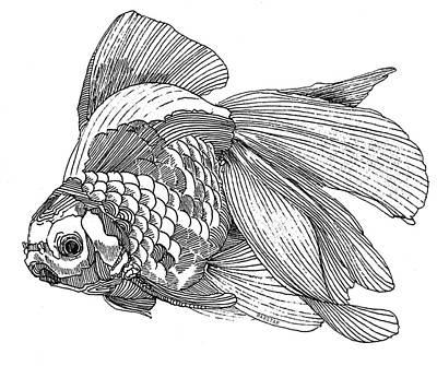 Ryukin - Goldfish Print by Shih Chang Yang