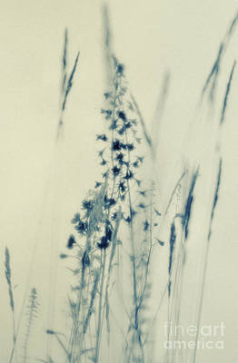 Summer Meadow Poem 2 Art Print by Priska Wettstein