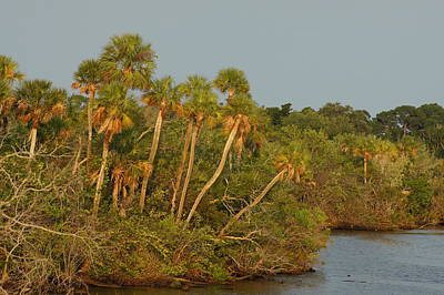 Photograph - Sabal Palm River by Lynda Dawson-Youngclaus