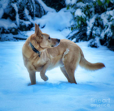 Photograph - Dog Enjoying The Snow by Bruce Block