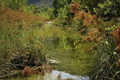 Photograph - Sabinal River And Copper Saw Grass by Nadalyn Larsen