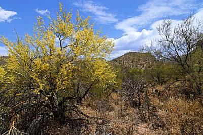 Sabino Photograph - Sabino Canyon 4 by Larry Ricker