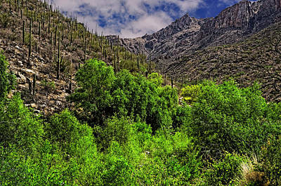 Art Print featuring the photograph Sabino Canyon H33 by Mark Myhaver