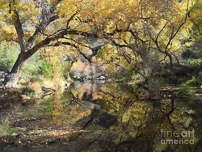 Photograph - Sabino Canyon In Fall by Paula Guttilla