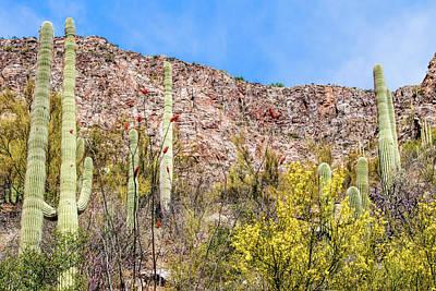 Coronado National Forest Photograph - Sabino Canyon 7 by Kenneth Roberts