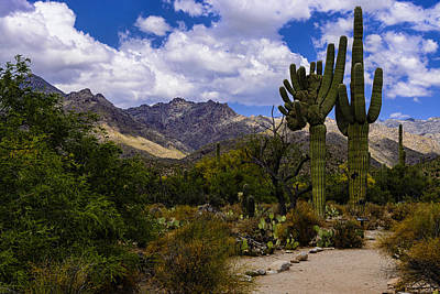 Sabino Canyon No4 Art Print