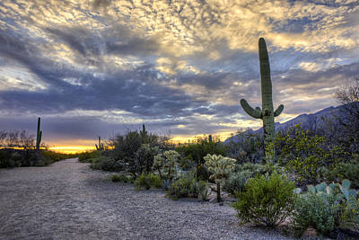 Photograph - Sabino Canyon - Tucson - Arizona by Nikolyn McDonald