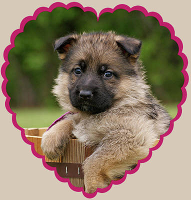 Sable Puppy In Heart Art Print by Sandy Keeton