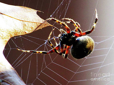 Photograph - Sac Spider Catches A Leaf by Ron Tackett