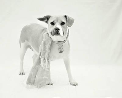 Photograph - Sacco 1 -bw by Kristia Adams