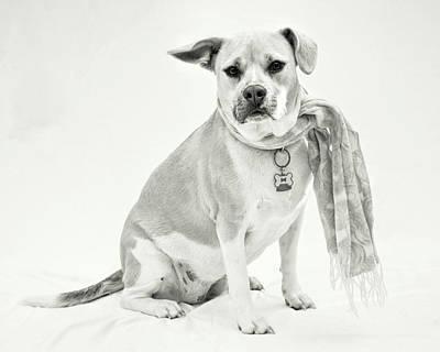 Photograph - Sacco 2 - Bw by Kristia Adams
